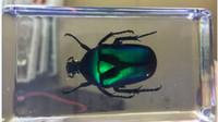 jouets scientifiques verts achat en gros de-Vert Rose Chafer Spécimen De Coléoptère Résine Emboîté Beetle Paperweight Jouets Transparent Souris Bloc Nouveau Bébé Biologie Science Enseignement Spécimens