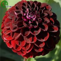 dahlias tohumları toptan satış-30 adet Dahlia tohumları Çok Yıllık Çiçek Tohumları Ev Bahçe için Bonsai içinde y020