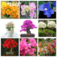 Wholesale Bougainvillea Flowers - 9 Kinds of Bougainvillea Spectabilis Willd Seeds Can Be Choose Perennial Bonsai Plant Flower Seeds Bougainvillea - 100 PCS