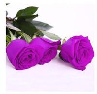 semillas de envío gratis al por mayor-Nueva llegada Purple Rose Seeds * 60 Piezas Semillas por paquete * Venta caliente de plantas de jardín Envío gratis