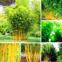 свежие семена деревьев оптовых-Phyllostachys Aureosulcata Домашний сад растений сад семена дерева бамбук семена Домашний сад растение свежий зеленый бамбук 50шт