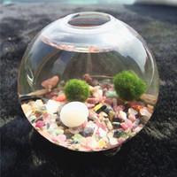 "Wholesale Glass Terrarium Kit - Marimo pet terrarium kit -3"" footed glass vase,aquatic living moss ball,tourmaline aquarium gravels,birthday gift for friends"