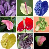 karışık çiçek tohumları toptan satış-Wholesale100 Mix antoryum andraeanu tohumları, kapalı saksı çiçekleri Anthurium bitki bitki bonsai