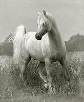 ingrosso bella pittura di cavalli-bellissimo animale cavallo bianco nel paesaggio dipinto a mano di arte animale pittura a olio su tela spessa.Multi dimensioni zhongguo