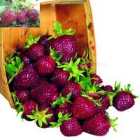 ingrosso semi di bacche-500 pz Colore Raro Viola Semi di Fragola Cherry Berry Semi di Frutta Frutta Decilious Casa Giardino Semi In Vaso Fragaria ananassa Duch