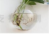 Wholesale 10cm Air Plant Wall Glass Vase Terrarium Wall Planters Fighting Fish Tank for Home Decororation Indoor Wall Planters Green Gifts