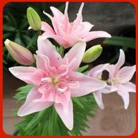 ingrosso semi di bulbo-Semi del fiore del giardino del seme delle lampadine del giglio del profumo della palla del fiore del giglio dell'Olanda