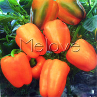 Wholesale Bell Pepper Plants - Orange Bell Pepper 20 Vegetable Seeds for Planting Non-GMO Easy-to-grow DIY Home Garden Pot Container Yard Vegetable Plant Productive Yummy