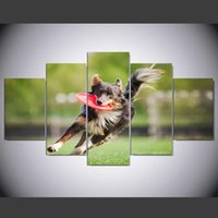 Wholesale Pictures Disc - 5 Panels Border Collie Dog Brings The Flying Disc Painting Picture Print On Canvas Animal Pictures IM-268
