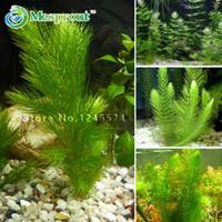 ingrosso aquatic plant-Promozione!!! 500 semi misto acquario serbatoio di pesci semi di erba acqua semi di piante acquatiche Spedizione gratuita