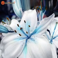 ingrosso semi di cuore-Speciali Blue Heart Lily Semi di piante in vaso Bonsai pianta giglio semi di fiori per la casa giardino 50 particelle / lotto