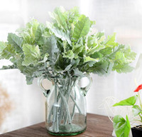 Wholesale Display Felt - MOQ10PCS Centaurea Cineraria Silk Feel Simulation Green Leaves Artificial Flowers for wedding party supplies accessories DIY flowers