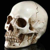 Wholesale Home Furnishings Office - high precious and similar resin human skull Halloween party gift Home furnishings Medical teaching mold office bar and entertainment decor