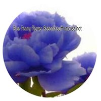 Wholesale Paeonia Seeds - 100pcs a set Blue Peony Flower Paeonia suffruticosa Seed Rare Seed Hot Seed Great Quality Great Service Great Price