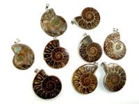 ammonit-anhänger großhandel-Wholesale 10 PC-natürlicher Ammoniten-Anhänger-Fossil-Charme mit Silber überzogener Kaution, versteinerte Anhänger-Charme-Art- und Weiseschmucksache-populäre einfache Art