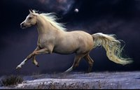Wholesale Horse Art Oil Paintings - Framed White Horse Running in the Moonlight,Genuine Hand Painted Animal Art oil Painting On Thick Canvas Museum Quality Multi sizes HS014