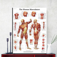 Wholesale Art Body Figure - ZZ1854 Human Body Anatomy Canvas Art Print Painting Poster Wall Pictures For Living Room Home Decorative Hospital Decor No Frame