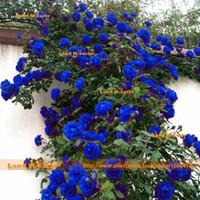 çince çiçek bitkisi toptan satış-100 Tohumlar / Paketi, Nadir Çin Açık Mavi 'Büyüleyici Lady' Gül Çiçek Tohumları, Güçlü Frangrant ILE Tırmanma Çiçek Bitki Tohumları!