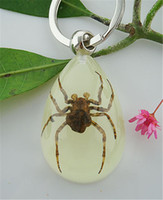 Wholesale Real Scorpion Keychain - Free Shipping 5 PCS High Quality ice drop jewelry mix real scorpion&spider&crab&beetle keychain Wealth TAXIDERMY GIFT