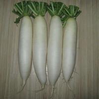 rabanete branco venda por atacado-Branca Frutas Radish Seeds horta orgânica sementes não-GM longo Rabanete Vegetable Seeds 60 PCS
