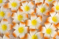 Wholesale plumeria hawaiian foam frangipani flower for sale - Group buy 100PCS cm Plumeria Hawaiian Foam Frangipani Flower for Wedding Party Hair Clip Flower Bouquet New