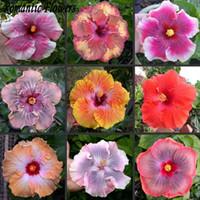 flores para jardines perennes. al por mayor-Venta al por mayor50 Partícula / bolsa Gigante Hibiscus Semillas de flores Jardín Inicio Perenne Pottedplant Bonsai