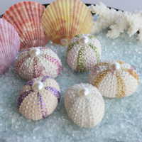 white sea coral NZ - Free Shipping(10pcs lot)Flashing White Sea Urchin Natural Shell Conch Beach Wedding Decoration Coastal Home Decoration