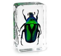 Wholesale Kid Science Kits - Green Rose Chafer Beetle Specimen Acrylic Resin Insect Embedded Education Toys Paperweight Transparent Mouse Kids New Biology Science Kits