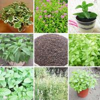 ingrosso semi di verdure del balcone-Variety Plant Green Vegetable Mint Seeds Balcone Semi di piante aromatiche alla menta piperita in vaso Circa 200 pezzi / lotto