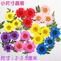 Wholesale Regenerated Flowers Chrysanthemum crystal Some Colors Pressed Flower For Holidays DIY Bookmark Home Onament