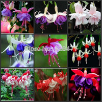 Wholesale Fuchsia Flower Seeds - wholesaleMix fuchsia ,Bonsai flowers lantern flower fuchsia seeds - 100 pcsbonsai plant garden