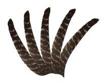 Wholesale turkey feathers arrow for sale - Group buy 15pcs Right Wing Real Turkey Feathers for Glass Fiber Bamboo Wood Archery Arrows Hunting and Shooting Shield