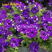 sementes de flores roxas venda por atacado-Rare 'Night Sky' Roxo Petunia Semente de Flor Anual, 100 Sementes / Pack, Bonsai Plantas Ornamentais Jardim Petunia