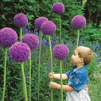 sementes de flores roxas venda por atacado-30 Gigante Roxo Allium Giganteum Bonito Sementes de Flores de Jardim Planta A Taxa de Brotamento 95% Flor Rara Para O Miúdo