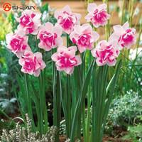 ingrosso aquatic plant-Wholesale100 Bonsai Semi di piante acquatiche Doppie petali Rosa Daffodils Bonsai di semi