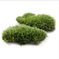plantas de hierba artificial en maceta al por mayor-1 unids Verde Artificial Moss Fake Coral Stone Modelo Planta de Hierba En Maceta Micro Paisaje Jardín de Hadas Ornamento Del Acuario Decoración