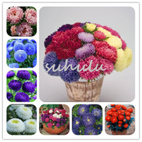 Wholesale rainbow chrysanthemum flower seeds for sale - Group buy 200 Bag Aster Seeds Mixed Aster Bonsai Flower Seeds Rainbow Chrysanthemum Seeds Perennial Flowers Home Garden Plant Make For Tea
