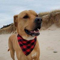 kırmızı beyaz köpeği yaka toptan satış-Patlayıcı köpek köpek moda yaka havlu tükürük havlu klasik kafes yaka kedi ve köpek çift pamuk üçgen eşarp kırmızı siyah, kırmızı ve beyaz