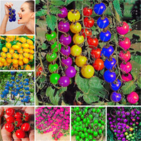 Wholesale Plant Cherry Seeds - New! 120 pcs colourful cherry tomato seeds Balcony Fruits and Vegetables seeds Potted Bonsai Potted Plant Tomato Seeds Free Shipping