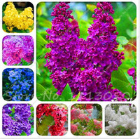 100 pcs colorful bonsai lilac seed Japanese Lilac (Extremely Fragrant) clove flower seeds lilac trees outdoor plant for home garden
