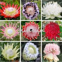 120 Pcs Fresh Rare Protea Cynaroides Seeds Easy Planting Rare Bonsai Flower Seed Variety Complete Fresh Rare Flower Seed