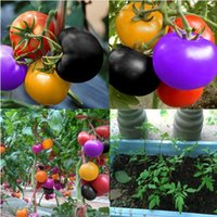 Wholesale vegetable seeds bonsai for sale - Group buy 100pcs bag rainbow tomato seeds rare tomato seeds bonsai organic vegetable fruit seeds potted plant for home garden