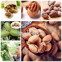 Wholesale Nut Seeds - Pecan Seeds Carya Illinoinensis Nut Seeds Rare Outdoor Fruit Tree Subtropical Plant Seeds For Home Garden 2pcs Bag