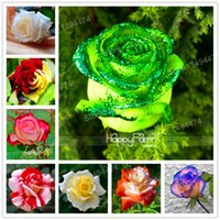 ingrosso sementi forti-Vendita calda! Semi di semi di rose 200 semi rari misti Fiori di semi di bonsai di fiori rosa profumati belli e profumati facili da piantare