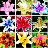 ingrosso piante del cortile-100 pezzi di fiori di tulipano, garland lilium brownii semi di fiori al coperto bonsai cortile piante fiori semi di giglio crescita naturale