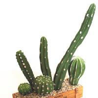 ingrosso piccolo giardino paesaggistico-6pcs / set artificiale cactus decorazione finta plastica piante grasse falso mini paesaggio accordi piccolo giardino verde succulente