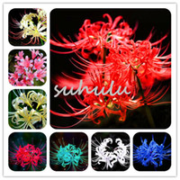 Wholesale Rare Beautiful Flowers - Hot Selling Rare 10 Colors Available Lycoris Seeds Potted Plant Seed Lycoris Radiata Gardening Beautiful Flower Seeds 100 Pcs Free Shipping