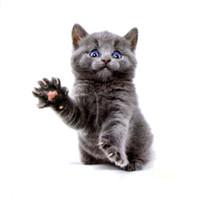 vorübergehende katze tattoo großhandel-Die süße Katze der blauen Augen Wasserdicht Temporäre Tattoos Sticker Body Art Tattoo Schönheit Tiere Tattoo Ärmel Temporaryt Tatoo