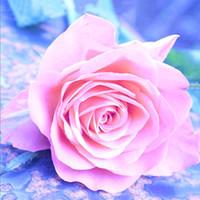 schöne rosa kreuze großhandel-Lieblings-Pflanze DIY 5D Wohnzimmer Schlafzimmer Hobby handgemachte Kreuz bestickte Mosaik schöne rosa Rose Diamant Gemälde