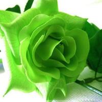 flor rosa colores azul al por mayor-Venta al por mayor Rojo Azul Colores Rosa Semillas de flores 30 Semillas por paquete Semillas de flores Planta de jardín en casa